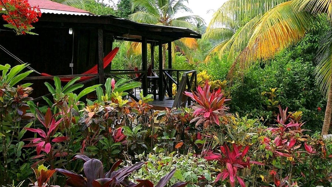 hibiscus valley Inn, Dominica, bungalow
