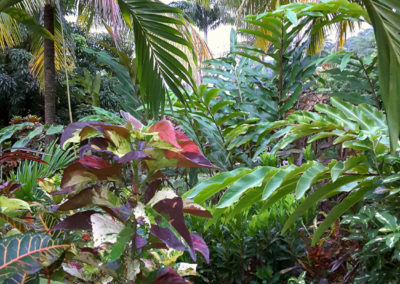 The gardens around Hibiscus Valley Inn, Dominica