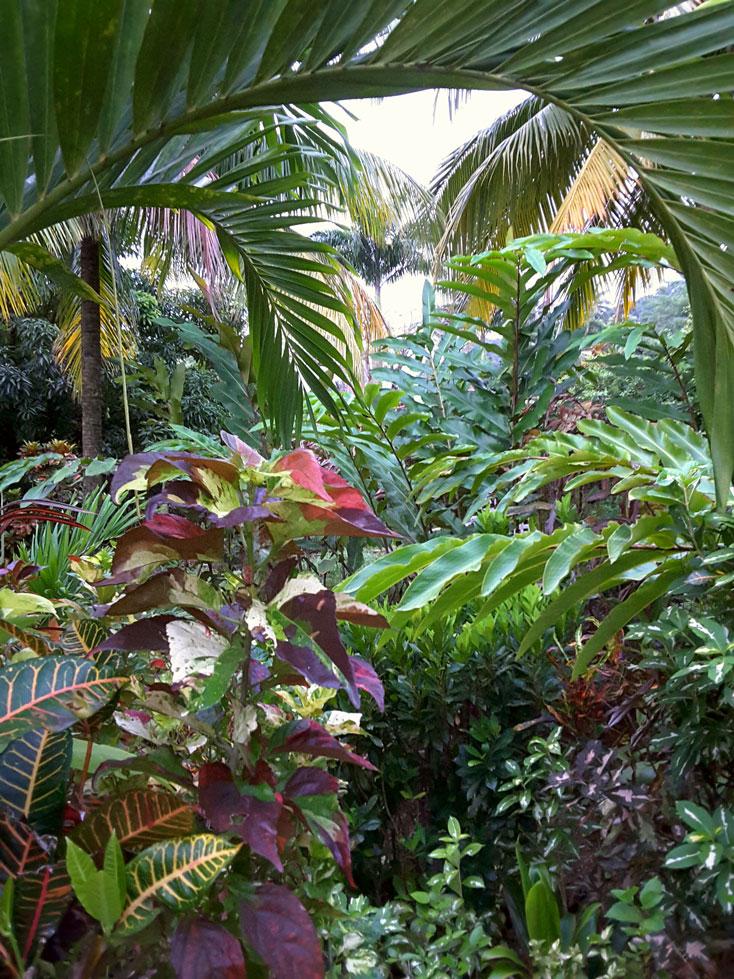 The gardens around Hibiscus Valley Inn, Dominica